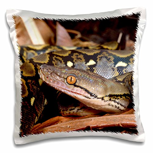 Danita Delimont - Snakes - Reticulated Python snake - NA02 DNO0481 - David Northcott - 16x16 inch Pillow Case (pc_83979_1) -