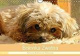 Bolonka Zwetna 2018 (Wandkalender 2018 DIN A4 quer): Anschaulich, liebevoll und kreativ wurde hier...