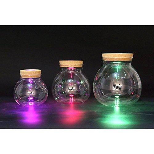 4 Zoll/5 Zoll/6 Zoll Runder Glas Jar Terrarium mit einem LED-Kork ist ideal für DIY Marimo Aquariumklein
