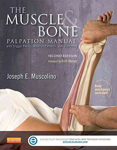 [The Muscle and Bone Palpation Manual with Trigger Points, Referral Patterns and Stretching] (By: Joseph E. Muscolino) [published: March, 2015]
