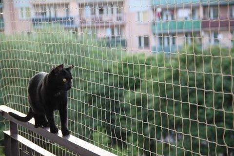 Filet Balcon pour les Chats et les Oiseaux STONE , 5x5 M + 50 FastNet© + 1 Tube silicone 80ml