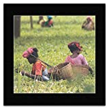 Mini-Poster The Wonderful World of Tea - Sri Lanka Tea