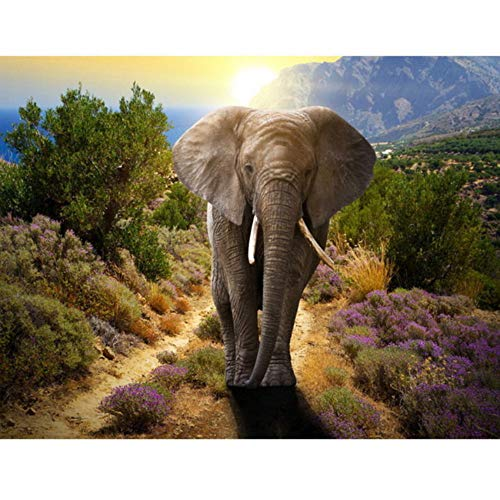Yqgdss Éléphant Animal Image Numérique Peint À La Main Unique Peinture À l'huile DIY Dessin par Numéros Maison Enfants Cadeau Coloriage Décor Art 40X50 cm Cadre