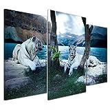 Bilderdepot24 Kunstdruck - Tiger II - Bild auf Leinwand - 100x60 cm 3 teilig - Leinwandbilder - Bilder als Leinwanddruck - Wandbild Tierwelten - Wildtiere - Grosskatzen - zwei weiße Tiger
