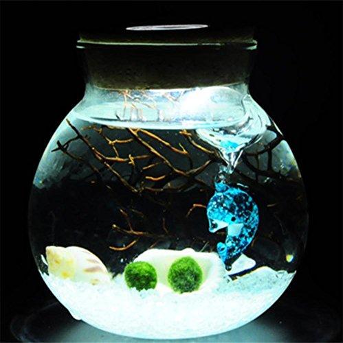 Happy Algen Ball Mikro - Landschaft ökologische Flasche Wasser Kultur grüne Pflanze kreative Büro Töpferei DIY Fernbedienung Lichter , 7 (ökologische Wasser-flasche)