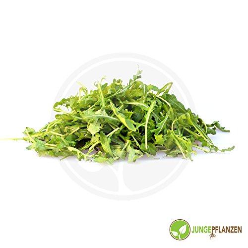 Graines d'herbe - Roquette sauvage - Diplotaxis tenuifolia - Brassicaceae 200 graines
