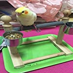 Hypeety Small Bird Parrot Stand Perch Table Top Stand Playground Grind Perch Swing Training Playstand Exercise Chew Toys… 5