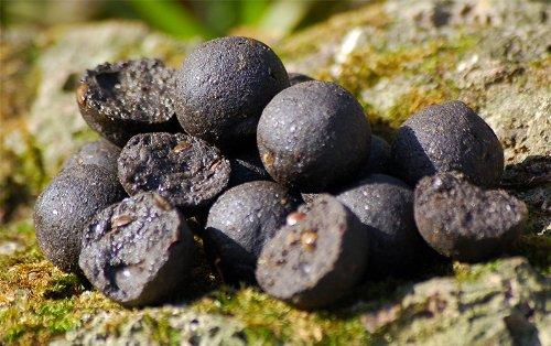 Carp Killers Boilies Black Hash 1kg (16mm / 20mm /24mm), Karpfenköder, Angelköder zum Karpfenangeln, Fischköder für Karpfen, Karpfenboilies, Killers Baits, Durchmesser:16mm