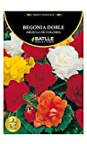 Bulbos - Begonia Doble mezcla de colores - Batlle