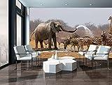 FORWALL Fototapete Tapete Elefant P8 (368cm. x 254cm.) Photo Wallpaper Mural AMF10093P8 Gratis Wandaufkleber Natur Afrika Fauna Tier Tiere Elefant Elefanten