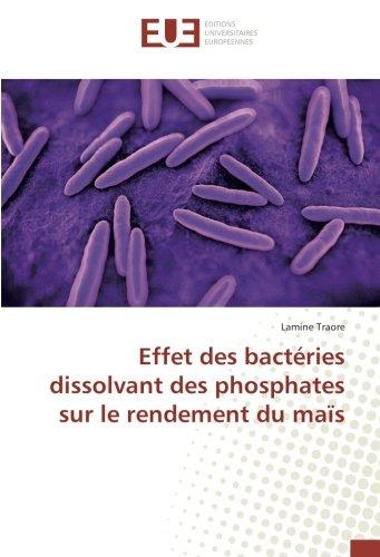 effet-des-bactries-dissolvant-des-phosphates-sur-le-rendement-du-mas