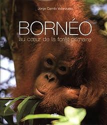 Bornéo : Au coeur de la forêt primaire (1CD audio)