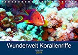Wunderwelt Korallenriffe (Tischkalender 2019 DIN A5 quer): Farbenpracht und Artenvielfalt unter Wasser (Monatskalender, 14 Seiten ) (CALVENDO Hobbys)
