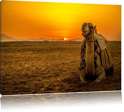 Kamel in ägyptischer Wüste bei Sonnenaufgang, Format: 80x60 auf Leinwand, XXL riesige Bilder fertig gerahmt mit Keilrahmen, Kunstdruck auf Wandbild mit Rahmen, günstiger als Gemälde oder Ölbild, kein Poster oder Plakat - Sonnenaufgang In Der Wüste Fertig