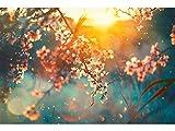 Oedim Fototapete Wand Kirschbaum beim Sonnenuntergang   Verschiedene Maße 600 x 300 cm   Dekor Esszimmer, Wohnzimmer, Zimmer