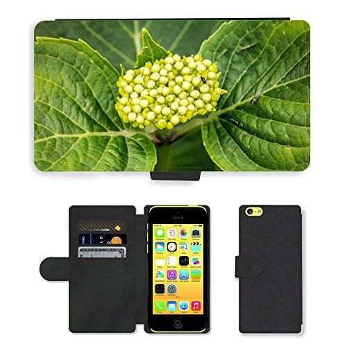 Just Mobile pour Hot Style Téléphone portable étui portefeuille en cuir PU avec fente pour carte/fleur/hortensia m00139637Young Frisch Vert//Apple iPhone 5C