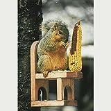 Eichhörnchen, [Misc.]