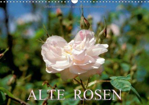 Alte Rosen (Wandkalender 2014 DIN A3 quer): Die Königin der Blumen (Monatskalender, 14 Seiten) por CALVENDO