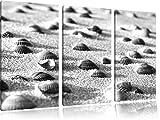 Conchiglie nella sabbia arte B & W immagine 3 pezzi picture tela 120x80 su tela, XXL enormi immagini completamente Pagina con la barella, stampe d'arte sul murale cornice gänstiger come la pittura o un dipinto ad olio, non un manifesto o un banner,