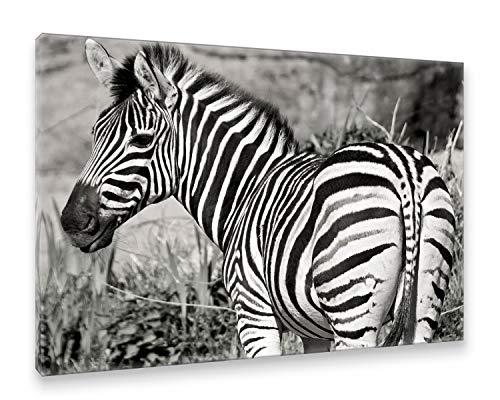 Natur / Schwarz Canvas An (Postereck - Premium Leinwand - 1183 - Zebra, Tier Natur Afrika schwarz Weiss Portait Portät - Größe 50,0 cm x 35,0 cm)