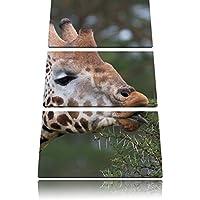 bella giraffa mentre si mangia immagine Canvas 3 PC 120x80 immagine sulla tela, XXL enormi (Increspato Tela)