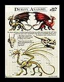 Kleine Leinwand Drachen Anatomie | Dragon Anatomy 25 x 19 cm | Anne Stokes Age of Dragons | Fantasy Bild Poster