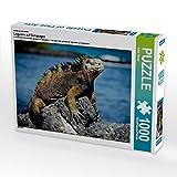 Ein Motiv aus dem Kalender Leguane auf Galapagos 1000 Teile Puzzle quer (CALVENDO Tiere)