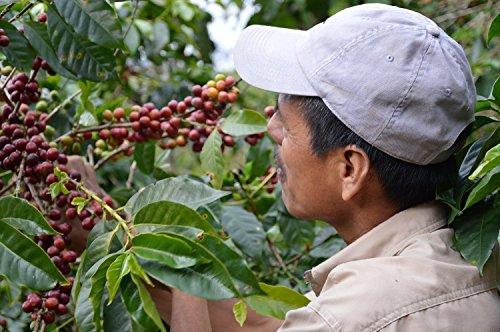 Happy Coffee Kaffeebohnen 1kg – Frisch geröstet – ganze Bohne – Premium Bio-Kaffee, Fair-trade, Arabica, Crema - 5