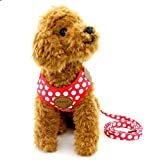 Ranphy Kleine Hunde Hundegeschirr mit Leine Polka Punkt Brustgeschirr Verstellbare Haustier Geschirr für Katze Rot Größe S