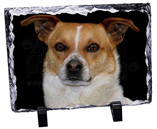 Jack Russell Terrier Foto Slate Weihnachten Geschenk, Ornament -