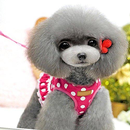 Eizur Hunde Geschirr mit Leine Verstellbare Hundegeschirr Pet Sicherheitsgeschirr Brustgeschirr...