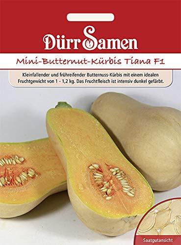 Mini-Butternut-Kürbis Tiana F1 von Dürr-Samen