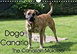 Dogo Canario, the Canarian Molosser (Wall Calendar 2017 DIN A4 Landscape): The Dogo Canario is a Spanish breed, native to the Canary Islands (Birthday calendar, 14 pages ) (Calvendo Animals)