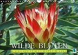 Wilde Blüten: Wildblumen aus aller Welt (Wandkalender 2019 DIN A4 quer): Die wilden Schwestern unserer Gartenblumen und Topfpflanzen (Monatskalender, 14 Seiten ) (CALVENDO Natur)