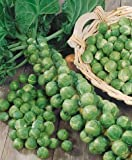 Brussel Sprouts - Best Reviews Guide
