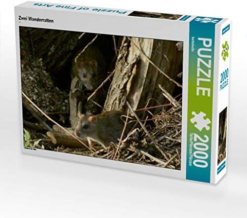 CALVENDO Puzzle Zwei Wanderratten 2000 Teile Lege-Grösse 90 x 67 cm Foto-Puzzle Bild Von | Qualité Fiable