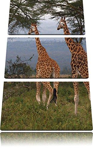 giraffa graziosa immagine savana 3 pezzi picture tela 120x80 in su tela, XXL enormi immagini (Increspato Tela)