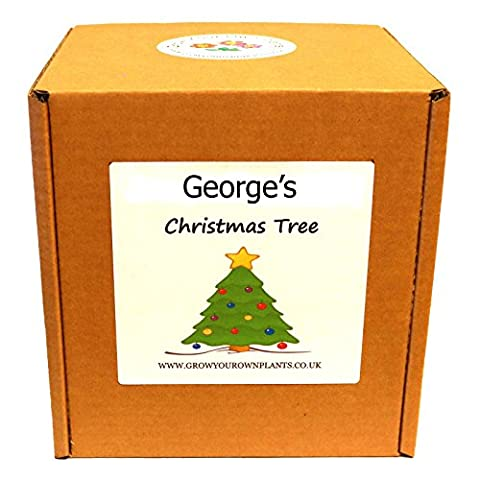 Personalised Grow Your Own Christmas Tree Plant Kit - Unusual
