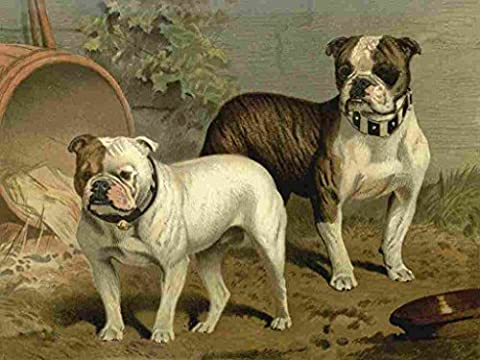 A4 Photo Barber Charles Dog 1881 Bull dogs Print Poster