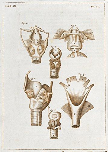 Vintage Anatomie 'EINE VOLLSTÄNDIGE ABHANDLUNG DER MUSKELN. Abbildung 29, Die oesophagus' von John Browne, England, des 17. Jahrhundert. 250 g/m², glänzend, Kunstdruck, A3, Reproduktion