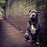 EzyDog Neo Wide - Halsband Hund breit, Hundehalsband für Große Hunde | Neopren gepolstert, reflektierend, wasserfest (XL, Rot)
