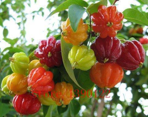 20pcs Surinam Kirschkerne, Pitanga Fruchtsamen, Brasilianische Kirsche {red}, seltene Pflanzen für Haus & Garten -