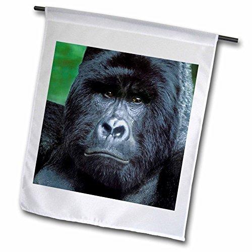 3dRose FL_72433_1 Zaire, Virungas Np, Wilder Silberrücken Berg Gorilla-AF50 BJA0001-Janyes Gallery Gartenflagge, 30,5 x 45,7 cm -
