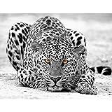 Fototapete Leopard Vlies Wand Tapete Wohnzimmer Schlafzimmer Büro Flur Dekoration Wandbilder XXL Moderne Wanddeko - 100% MADE IN GERMANY -Afrika Schwarz Weiß - Runa Tapeten 9034010b