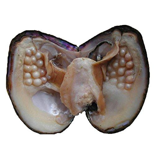 Oyster Pearl Anniversary Geschenke Süßwasser-Zuchtperle oval Perlen 5-7 mm Austern mit Perle Innen Jahrestag Geschenke für Frauen