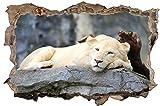 Löwe auf Stein Wildlife Wandtattoo Wandsticker Wandaufkleber D0691 Größe 70 cm x 110 cm