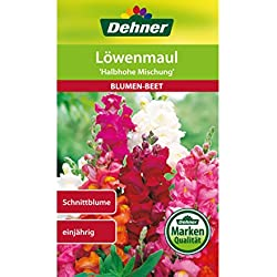 "Dehner Blumen-Saatgut, Löwenmaul, ""Halbhohe Mischung"", 5er pack (5 x 0.6 g)"