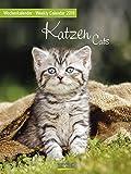 Wochenkalender Katzen - Kalender 2019 - Korsch-Verlag - Foto-Wochenkalender mit Platz zum Eintragen - 24 cm x 32 cm