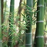 Statische Fensterfolie JOY static Dekorfolie Bamboo Bambus Meterware 90 cm