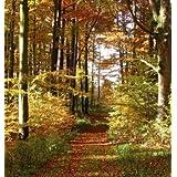 Fototapete waldweg  Suchergebnis auf Amazon.de für: Tapeten - Fototapeten - Waldweg ...